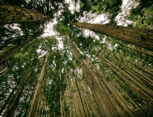 NAMA on sequestration of CO2 by afforestation of about 40,000 ha in Tajikistan